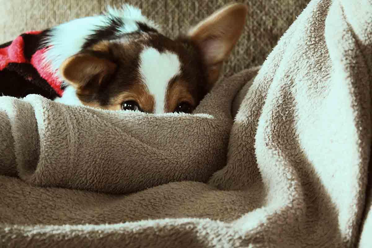Mantas para el sofá ¡Elige la más cálida para el otoño 2020!
